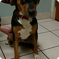 Adopt A Pet :: Holly - Huntley, IL