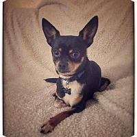 Adopt A Pet :: Chachee - Santa Clara, CA
