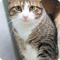 Adopt A Pet :: Max - Waupaca, WI