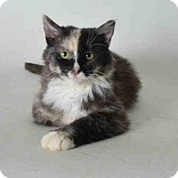 Adopt A Pet :: SABRINA - Ukiah, CA
