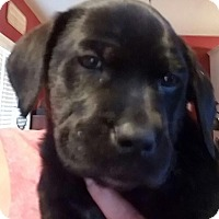 Adopt A Pet :: Winchester - Gun Litter - Acworth, GA