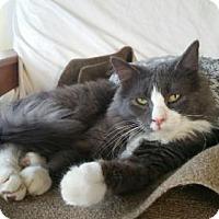 Adopt A Pet :: Abu - Grand Ledge, MI
