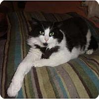 Adopt A Pet :: Bandit - Barnegat, NJ