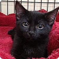 Adopt A Pet :: Sissy - Monroe, GA