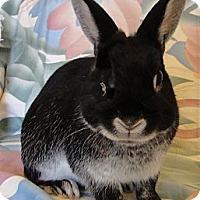 Adopt A Pet :: Martin - Los Angeles, CA