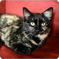 Adopt A Pet :: Posy - Davis, CA