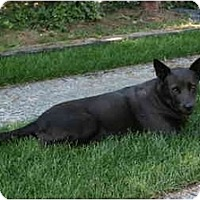 Adopt A Pet :: Zoe - Vancouver, BC