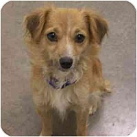 Adopt A Pet :: Meadow - Phoenix, AZ