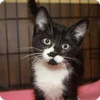 Adopt A Pet :: Emily (LE) - Little Falls, NJ