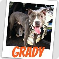 Adopt A Pet :: Grady - Brazil, IN