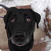 Adopt A Pet :: Izzy - Muskegon, MI