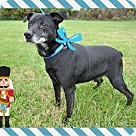 Adopt A Pet :: Nubby