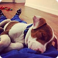 Adopt A Pet :: Novus - Gainesville, FL