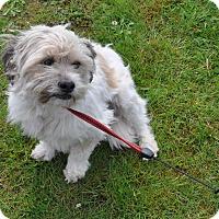 Adopt A Pet :: Charlie - Tumwater, WA