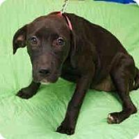 Adopt A Pet :: Snapple Adoption pending - Manchester, CT