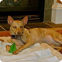 Adopt A Pet :: Brady - Surrey, BC