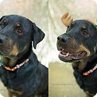 Adopt A Pet :: Jorja - Muskegon, MI