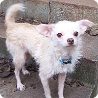 Adopt A Pet :: Deuce - Greensboro, GA
