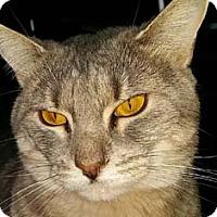 Adopt A Pet :: Aria - Merrifield, VA