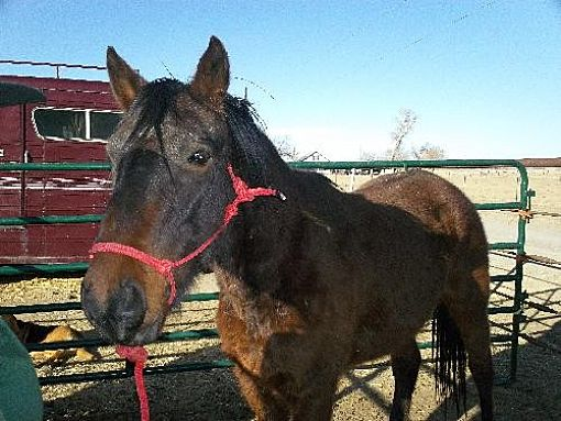 Mustang for adoption in Boone, Colorado - Blaze (fostered 2/5 365)