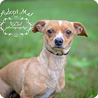 Adopt A Pet :: Macie - Fort Valley, GA