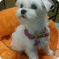 Adopt A Pet :: Beau - San Dimas, CA
