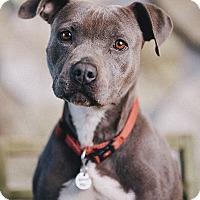 Adopt A Pet :: Roxy - Portland, OR