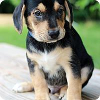 Adopt A Pet :: Greg - Waldorf, MD