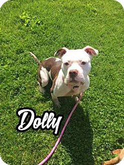 American Pit Bull Terrier Dog for adoption in Cary, Illinois - Dolly