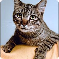 Adopt A Pet :: Otis - Ottumwa, IA