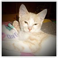 Adopt A Pet :: BARRY - Medford, WI