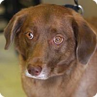 Adopt A Pet :: ROXY - Kyle, TX