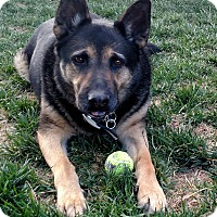 Adopt A Pet :: Sampson - Victorville, CA
