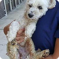Adopt A Pet :: Byron - Renton, WA