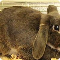 Adopt A Pet :: Cupcake - Waynesboro, PA