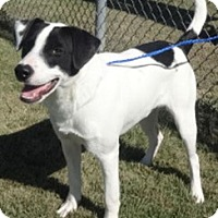 Adopt A Pet :: Rhett - Olive Branch, MS