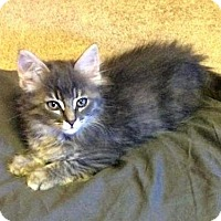 Adopt A Pet :: Banana's - Charlotte, MI