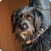 Terrier (Unknown Type, Medium) Mix Dog for adoption in Palmdale, California - Paxton