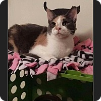 Adopt A Pet :: Cassidy Monroe - Huntington, IN