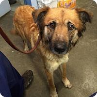 Adopt A Pet :: Bella - Aurora, IL