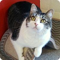 Adopt A Pet :: Mattie - Sarasota, FL