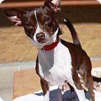 Adopt A Pet :: Rocky - Gilbert, AZ
