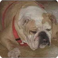 Adopt A Pet :: Fergie - San Diego, CA
