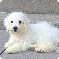 Adopt A Pet :: Oscar - Hilliard, OH