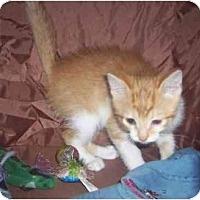 Adopt A Pet :: Shiloh - St. Louis, MO