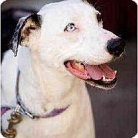 Adopt A Pet :: Maxie - Portland, OR