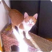 Adopt A Pet :: Sammy - Greenville, SC