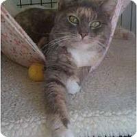 Adopt A Pet :: Patchpelt - Monroe, GA