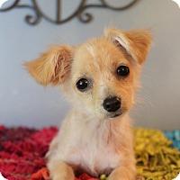 Adopt A Pet :: Cleo - Wytheville, VA