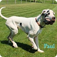 Adopt A Pet :: Paul - Pearl River, NY